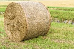 Pressed hay bales in rural area in detail stock image