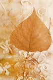 Pressed leaf Stock Images