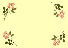 Pressed Pink Roses Stock Images
