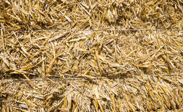 Pressed rye straw Royalty Free Stock Images