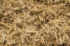 Pressed rye straw. Bales of compressed straw rye close-up shot Stock Photography