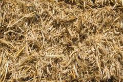 Pressed rye straw Stock Photography