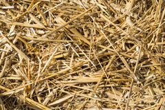 Pressed rye straw. Bales of compressed straw rye close-up shot Stock Image