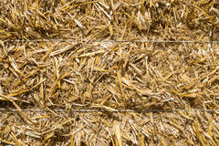 Pressed rye straw. Bales of compressed straw rye close-up shot Royalty Free Stock Photos