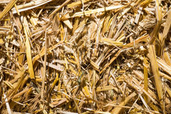 Pressed rye straw. Bales of compressed straw rye close-up shot Royalty Free Stock Image
