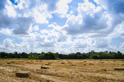 Pressed Straw bale left of harvest lying on a field  with blue s Stock Image