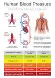 Pressione sanguigna umana illustrazione vettoriale