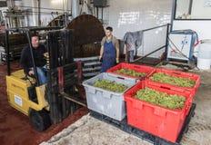 Pressoir in Dizy Francia Champagne Immagini Stock Libere da Diritti
