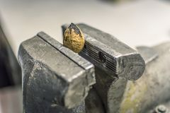 Pressure everyday surroundings. Nut in a vice. Royalty Free Stock Images