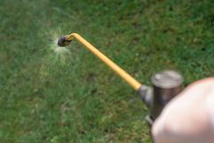 Pest control with pressure sprayer in your own garden royalty free stock images