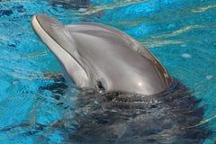Prestazione di Dophin Fotografia Stock