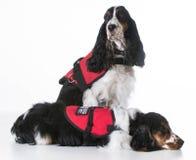 Preste serviços de manutenção a cães Imagem de Stock