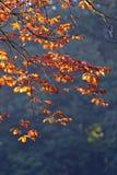 Presto autunno Immagine Stock