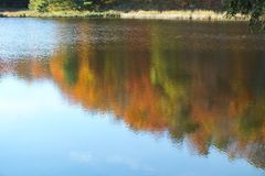 Inverted image oil painting in autumn water. royalty free stock photography