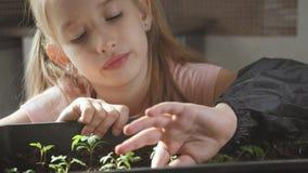 Pret weinig tuinmanzorg voor installaties Leuk weinig kindmeisje die zaailingen planten De lenteconcept, aard en zorg stock footage