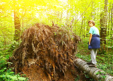 Preteen boy in the forest climb fallen tree Stock Image