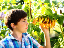 Preteen handsome boy with sunflower summer outdoor portrait Royalty Free Stock Images