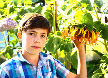 Preteen handsome boy with sunflower summer outdoor portrait Stock Photography
