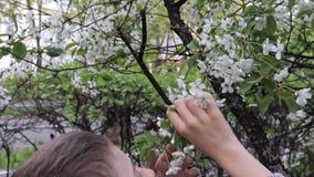 A preteen Kaukasische jongen die witte kersenbloemen in de de lentetuin ruiken stock video