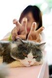 Pretend cat Royalty Free Stock Photo