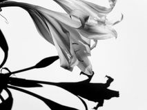 Preto & branco Imagem de Stock