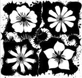 Preto & branco Ilustração Stock