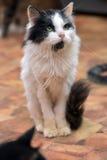 Preto com o gato macio fino branco foto de stock royalty free