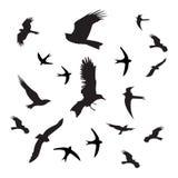 Preto da silhueta dos pássaros no fundo branco Imagem de Stock