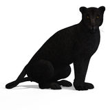 Preto do leopardo do gato grande Fotos de Stock