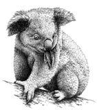 Preto e branco grave a ilustração isolada da coala ilustração royalty free