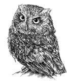 Preto e branco grave a ilustração isolada da coruja ilustração stock