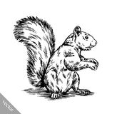 Preto e branco grave a ilustração isolada do esquilo ilustração royalty free