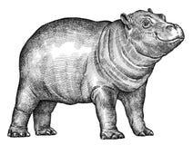 Preto e branco grave a ilustração isolada do hipopótamo ilustração royalty free