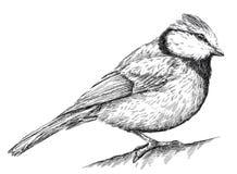 Preto e branco grave a ilustração isolada do melharuco ilustração do vetor