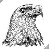 Preto e branco grave a ilustração isolada do vetor da águia ilustração royalty free