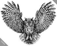 Preto e branco grave a ilustração isolada do vetor da coruja ilustração royalty free