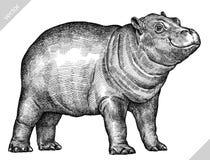 Preto e branco grave a ilustração isolada do vetor do hipopótamo ilustração do vetor