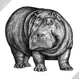 Preto e branco grave a ilustração isolada do vetor do hipopótamo ilustração stock