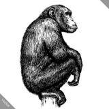 Preto e branco grave a ilustração isolada do vetor do macaco ilustração royalty free