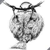 Preto e branco grave a ilustração isolada do vetor do melharuco ilustração royalty free
