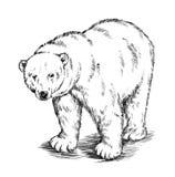 Preto e branco grave o urso isolado do vetor ilustração royalty free