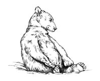 Preto e branco grave o urso isolado do vetor ilustração stock