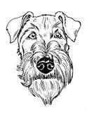 Preto e retrato do terrier irlandês branco ilustração stock