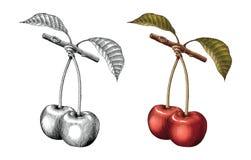 Preto e whi da ilustração da gravura do vintage do desenho da mão da cereja ilustração do vetor