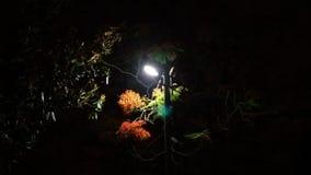 Preto vermelho da luz da noite da flor fotografia de stock