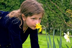 Pretty 8 Year Old Girl Smelling Daffodil. This pretty 8 year old Caucasian girl is smelling a yellow daffodil in her navy blue dress Stock Photo