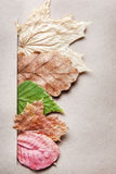 Pretty arrangement of dried leaves Stock Photos