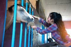 Pretty Asian woman petting horse in a farm. Royalty Free Stock Photography