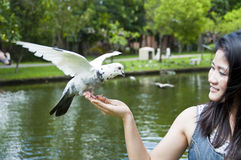 Pretty Asian woman and pigeon. Stock Image