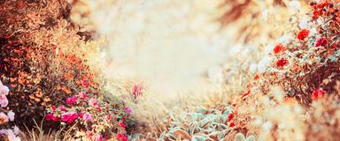 Pretty autumn background of sunny day with various garden or park flowers and fall foliage. Banner Stock Photo